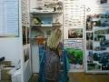 L'esposizione dei pesci in resina curata da Arcipesca Toscana